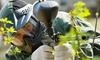 Victory Paintball - Cape Town: Two-Hour Paintball Session for Up to 14 People from R399 with Victory Paintball (Up to 61% Off)