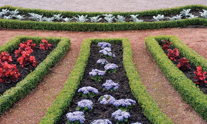 Green Design Group - Los Angeles: $100 for $200 Worth of Landscaping — Green Design Group