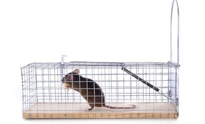 Rodent-Inspection Service from Simmons and Crowe Pest Control  (45% Off)