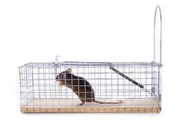 Simmons and Crowe Pest Control: Rodent-Inspection Service from Simmons and Crowe Pest Control  (45% Off)