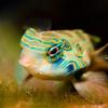 51% Off Two Aquarium Cleanings