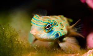 Mike's Aquatics of Jacksonville: $79 for Two Routine Cleanings for an Aquarium Up to 75 Gallons from Mike's Aquatics of Jacksonville ($160 Value)