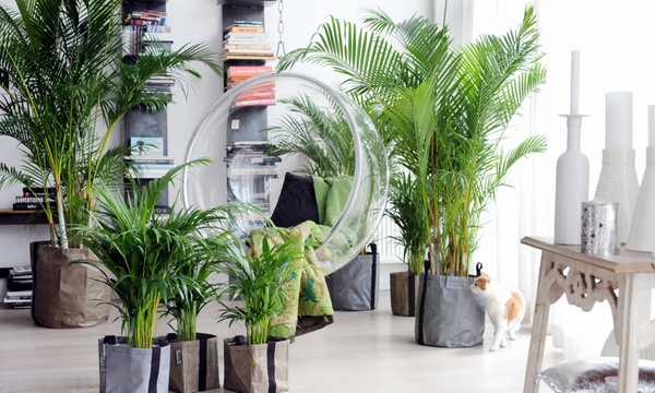 Verschillende palm planten in de woonkamer