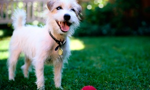 DoggieWorks: 5, 10, or 20 Days of Dog Daycare at DoggieWorks (Up to 54% Off)