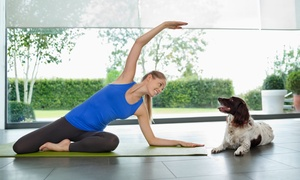 Skill Success: Online Beginner Yoga Master Class with 16 Fundamental Sessions from Skills Success (89% Off)