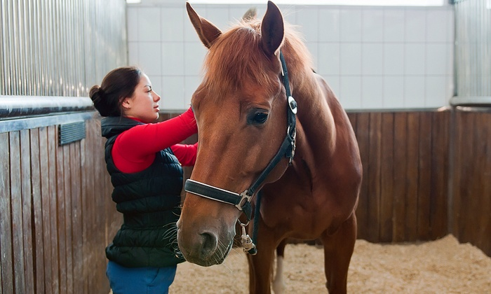 Times Square Riding Academy - Brandon: One or Three 60-Minute Beginner Horseback-Riding Lessons at Times Square Riding Academy (Up to 51% Off)