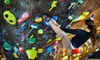 The Circuit Bouldering Gym - Multiple Locations: Bouldering Day Pass, Intro Class, or One-Month Membership for Two at The Circuit Bouldering Gym (Up to 67% Off)