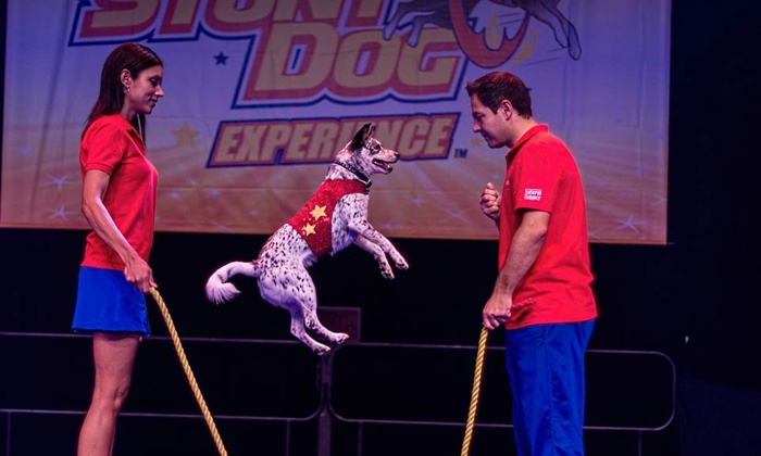 Chris Perondi's Stunt Dog Experience - Bob Hope Theatre : Chris Perondi's Stunt Dog Experience at Bob Hope Theatre on Saturday, February 15 (Up to 56% Off)