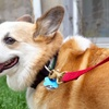 Up to 62% Off Dog Daycare at Hounds on the Hudson