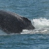 Up to 52% Off Tour from Cape May Whale Watcher