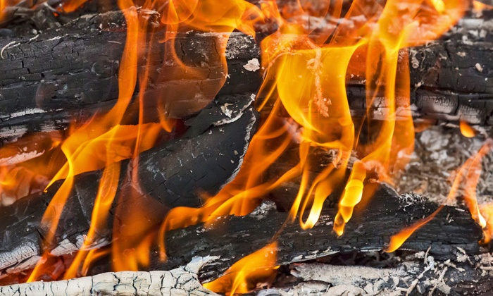 Pick Up the Skill of Fire Crafting on a Wilderness Adventure - Greenpoint: Use the element of fire as you spend the day learning survival skills, simple living practices, and camp cooking