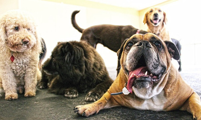 Pappy's Pet Lodge - Northeast Tarrant: Two or Five Nights of Dog Lodging and Daycare or 10 Daycare Visits at Pappy's Pet Lodge (Up to 69% Off)