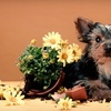 Up to 62% Off Dog Grooming and Boarding