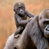 Zoo Atlanta – Up to 46% Off a Visit for Two