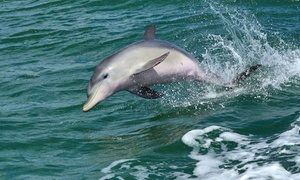 Mandurah Dolphin Tours: 90 Minute Dolphin & Sightseeing Cruise for 1 ($20), 2 ($40) or 4 People ($79) with Mandurah Dolphin Tours (Up to $112)
