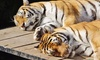Oakland Zoo - Oakland Zoo: $89 for a One-Year Family Membership to Oakland Zoo ($130 Value)