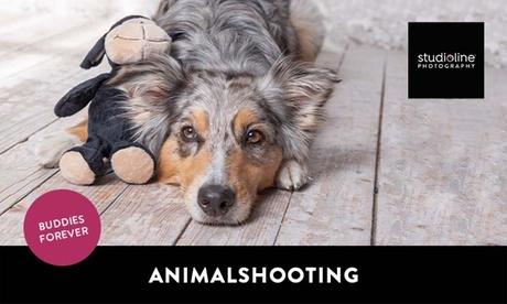 60 Min. ANIMAL-Fotoshooting-Erlebnis + Bilder & Goldcard bei studioline Photography (bis zu 77% spar