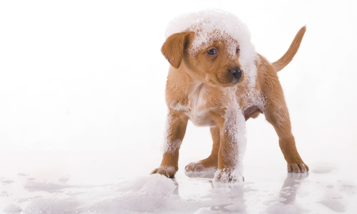 Fluffy Doggy - Burlingame Terrace: Full Dog Bath for Small, Medium and Large Dogs at Fluffy Doggy (Up to 52% Off)