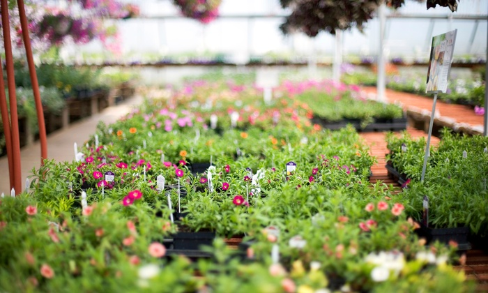 Dumfries Nursery & Garden Center - Dumfries: $25 for $50 Worth of Baskets, Annuals, Flats, and Pouches at Dumfries Nursery & Garden Center