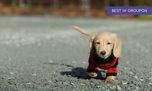 Dog Wood Park: 5 or 10 Visits to Dog Wood Park for Up to Two Dogs (Up to 47% Off)
