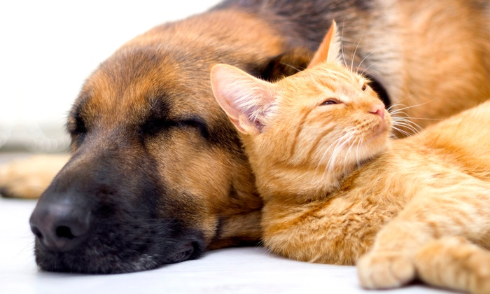Loyal Family Veterinary Hospital - Bellevue: $49 for a Pet Health Check Package at Loyal Family Veterinary Hospital ($207 Value)