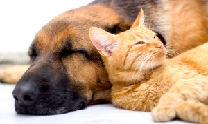Loyal Family Veterinary Hospital: $49 for a Pet Health Check Package at Loyal Family Veterinary Hospital ($207 Value)