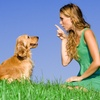 51% Off 60-Minute In-Home Dog-Obedience Evaluation & Training