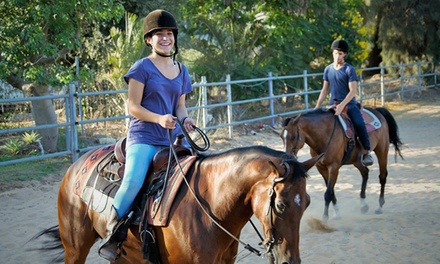 Cavaliero חוויית רכיבה על סוסים: שיעור פרטי ב 89₪ או 3 שיעורים פרטיים ב 219₪ בלבד בבני ציון בשרון! מתאים לכל הרמות