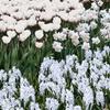 All White Flower Garden Collection (25-Bulbs)