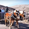 Up to 56% Off Scenic Wagon Ride with Lunch
