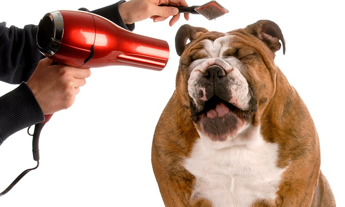 Holly and Hugo: $24.99 for an Accredited Guide to Dog-Grooming Course at Holly and Hugo ($175 Value)