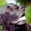 Up to 54% Off Pet Sitting or Dog Walking