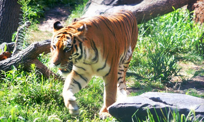 Blank Park Zoo - Des Moines: Visit for Two or Four Adults or Children at Blank Park Zoo