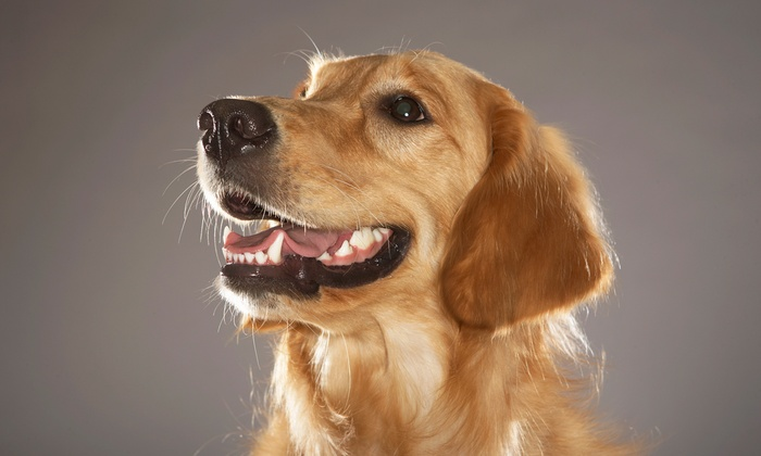 Dog Bar - North Charlotte: $5 for a One-Year Dog-Park Membership at Dog Bar ($10 Value)