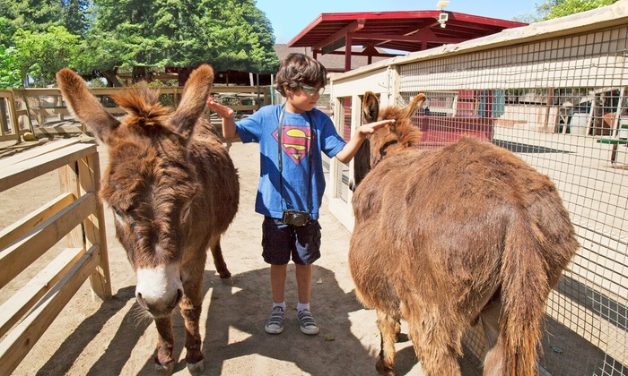 Zoomars - San Juan Capistrano: $22 for a Petting Zoo Visit for Four with Train Rides for Two at Zoomars ($46 Value)