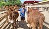 52% Off Petting Zoo Visit