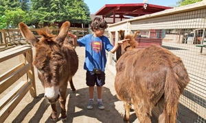Zoomars: $22 for a Petting Zoo Visit for Four with Train Rides for Two at Zoomars ($46 Value)