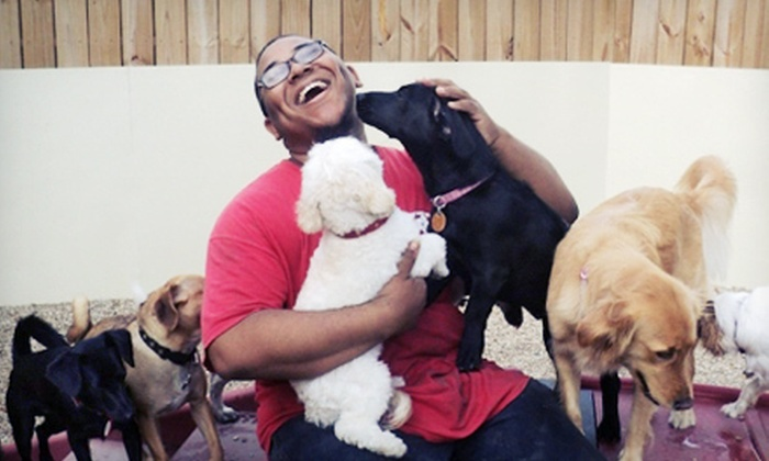 Camp Bow Wow of Bixby - Jade Crossing: Three or Five Days of Dog Daycare at Camp Bow Wow of Bixby (Half Off)