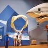 Up to 51% Off Museum Membership