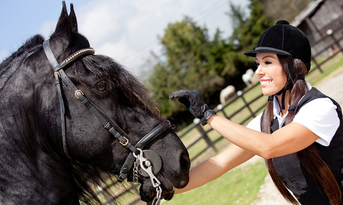 Seaton Hackney County Stables - Seaton Hackney County Stables: One or Three Riding Lessons, or a Trail Ride for Three at Seaton Hackney County Stables (Up to 52% Off)