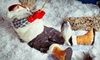Shillito's Elves at Newport on the Levee - Newport: Christmas-Decoration Viewing for Up to Four or Eight at Shillito's Elves at Newport on the Levee (Up to 52% Off)
