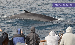 Three-hour Whale-watching Tour For One, Two, Or 10 From San Diego Whale Watch (up To 61% Off)
