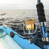Up to 38% Off Fishing Tour at Dolphin Family Tours