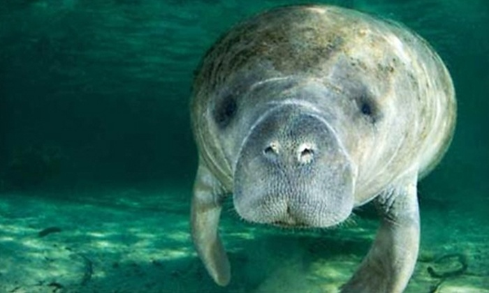 Manatee Guides - New Pass Bridge: Three-Hour Manatee and Nature Watching Kayak Tour for One or Two from Manatee Guides (Up to 54% Off)