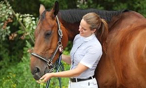 """Coaching und Pferd: Workshop """"Sprache ohne Worte"""" oder Tages-Workshop """"Das Pferd als Spiegel"""" bei Coaching und Pferd (59% sparen*)"""
