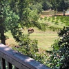 Up to 53% Off Winery Tour in Monroe