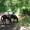 Up to 55% Off Horseback Riding in St. Clair
