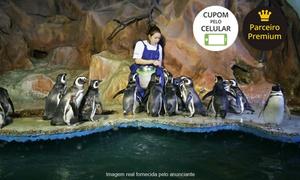 Acqua Mundo: Acqua Mundo – Guarujá: 1, 2, 3 ou 4 ingressos para adulto ou criança