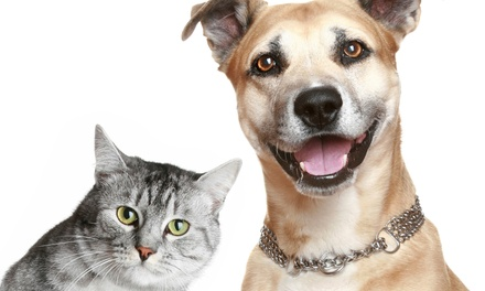 $62 for a Cat or Dog Annual Pet-Vaccination Visit at Hometown Animal Hospital ($150.75 Value)