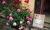 Lot de 3 roses en pot, différentes couleurs